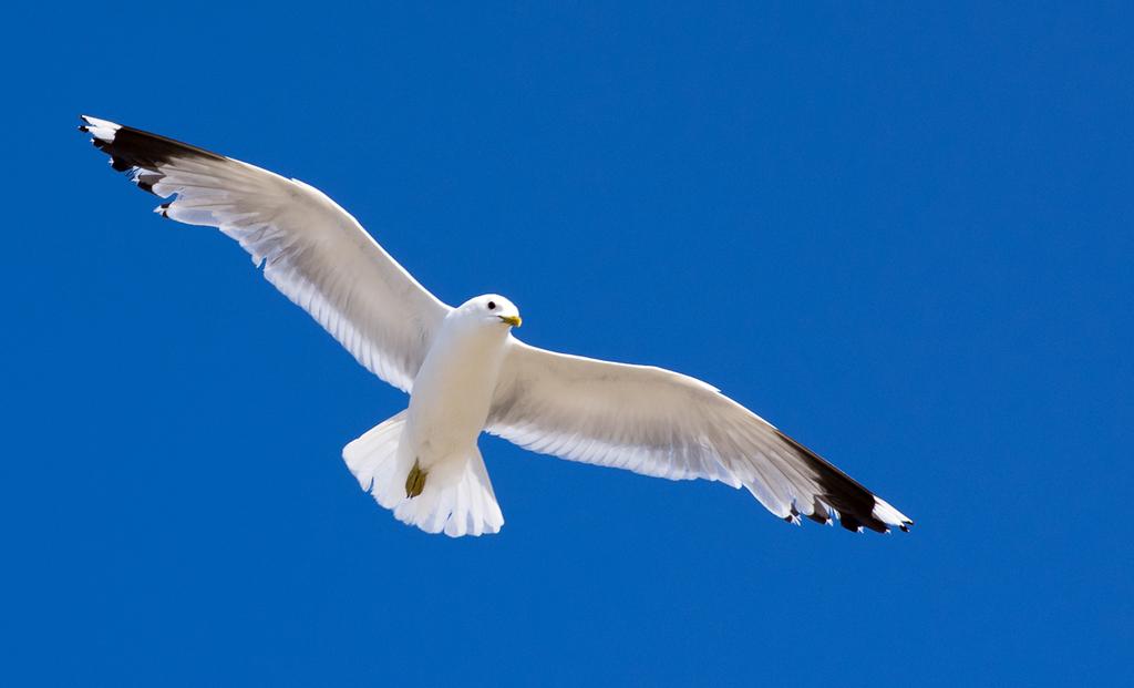sammelthread vögel im flug • pentaxians